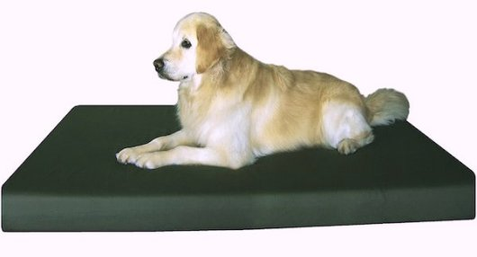 chewproof dog beds
