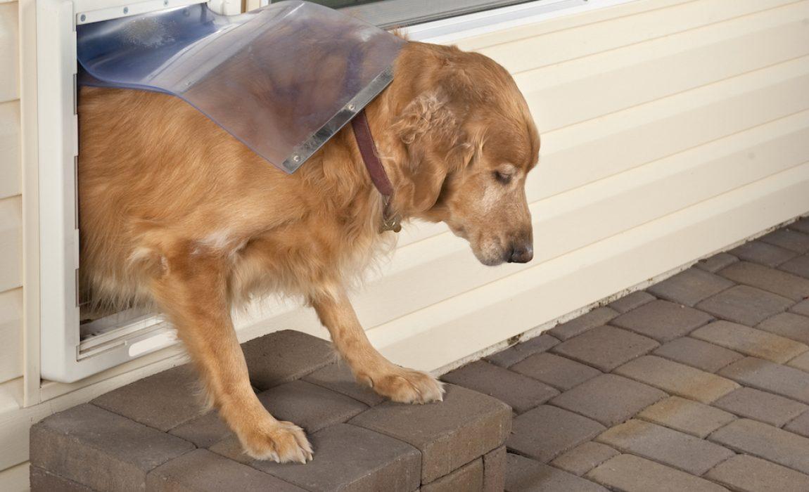 13 best dog doors 2021 reviews easy