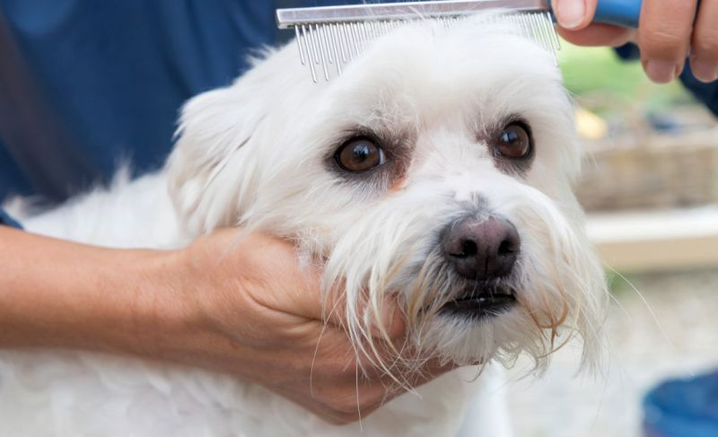How To Get Rid Of Dog Tear Stains
