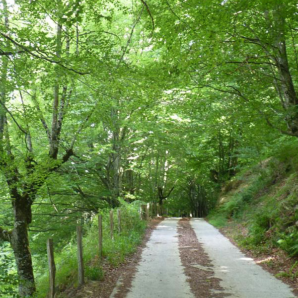 casa rural ecológica kaañoetxea - rutas a pie