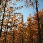casa rural ecológica Kaanoetxea-galeria-10 - Alerces en otoño