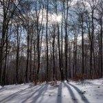 Bosque mágico en Arrarats – concurso