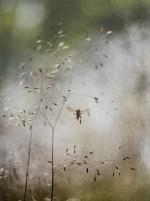 Heidehof - Binnenvlieger