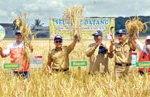 Dupont Luncurkan Kocide Opti Fungisida
