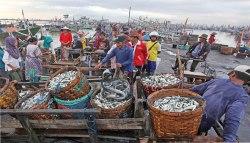 Hasil Tangkapan Melimpah, Nelayan Muncar Semringah