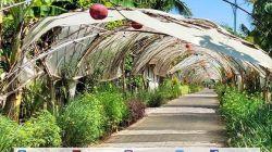 terowongan_bambu