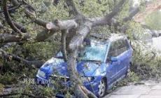 Permalink ke Nyaris Masuk Jurang, MiniBus Ini Hantam Pohon