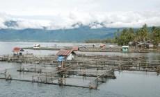 Permalink ke Satu Mesin Untuk Selamatkan Ikan di Danau Maninjau