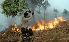 Permalink ke BNPB Awasi 9 Provinsi Antisipasi Kebakaran Hutan