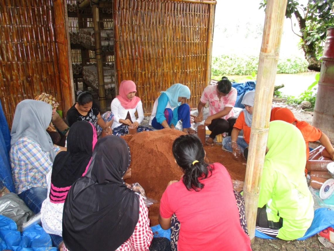Petani Jamur di Kabupaten Padang Pariaman. Foto : Istimewa