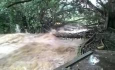 Permalink ke Banjir Hantam Objek Wisata Jembatan Akar