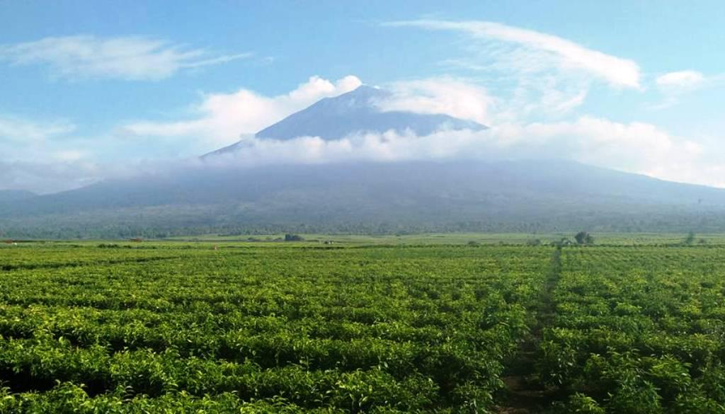Gunung Kerinci, Jambi
