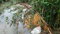 Pemkab Pessel; Tidak Ada Pengganti Tanaman Pertanian Warga Terdampak Banjir