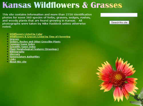 Kansas Wildflowers and Grasses Web Page