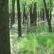 Bottomland Hardwood