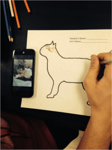 Student using a photo from their phone to diagram a cat. In the future these could be posted to a blog and other students could contribute to the genotyping of each cat.