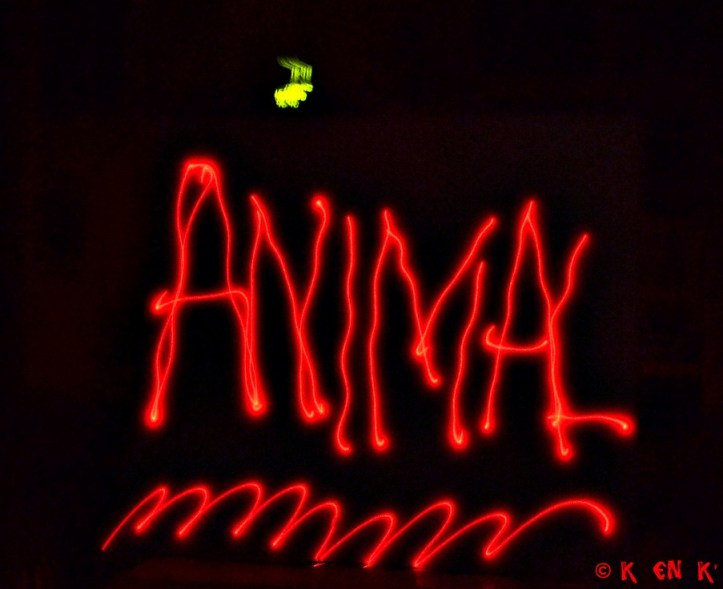 projet 52 thème n°19 animal ligth painting