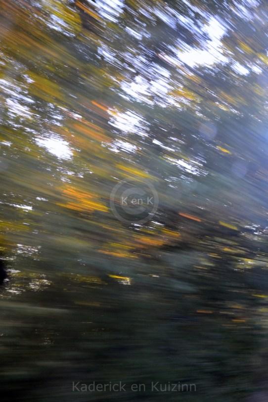 végétation-arbre-feuilles-automne