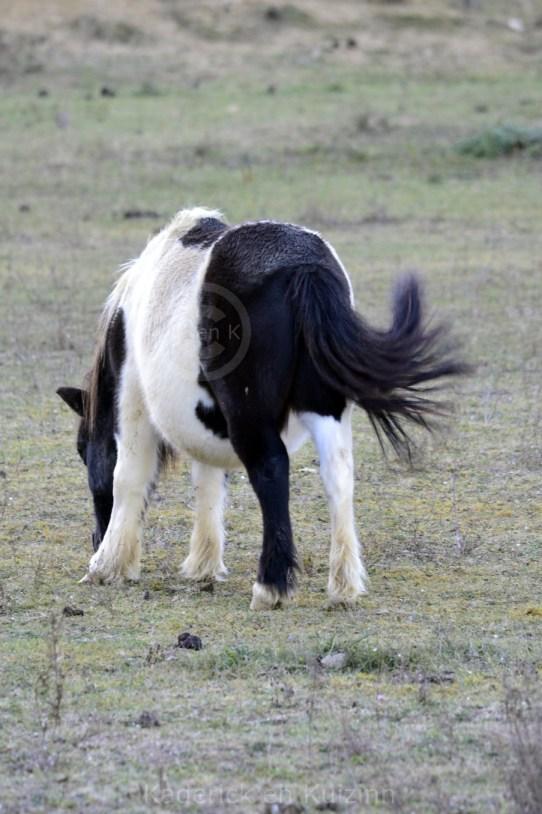 nature-blog-photo-animaux
