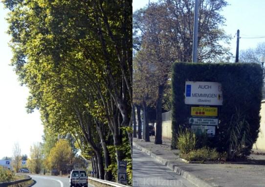 route-arbre-blog-promenade