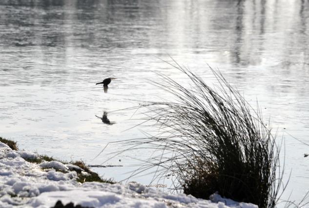 """Photo d'un oiseau sur le lac gelé pour le thème """"Voler"""" du projet 52 pour vivre la photo"""