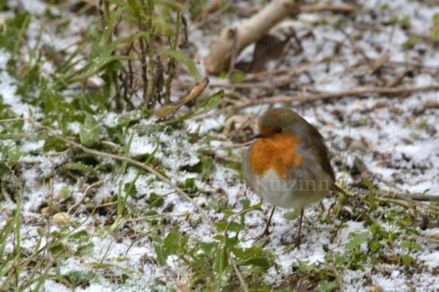"""Photo d'un oiseau sous la neige dans mon jardin pour le thème du projet photo """"vivre la photo"""""""
