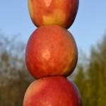 Photo de trois pommes posé l'une sur l'autre pour le projet 52 du blog vivre la photo