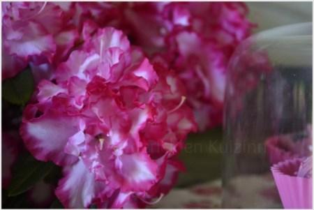 Cupcakes et azalées roses