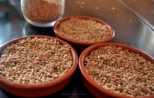 Noël Tradition Provençale avec le blé de la Sainte Barbe - Kaderick en Kuizinn©2012