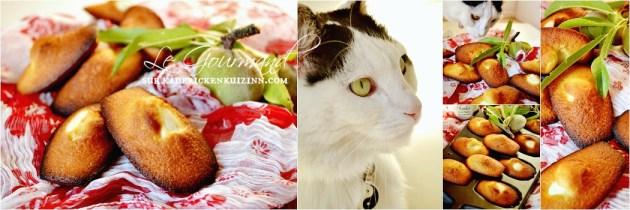 Recette madeleine - Madeleine amandes fraîches et fève tonka