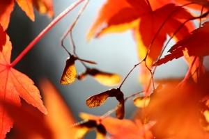 Fotografia krajobrazów jesienią