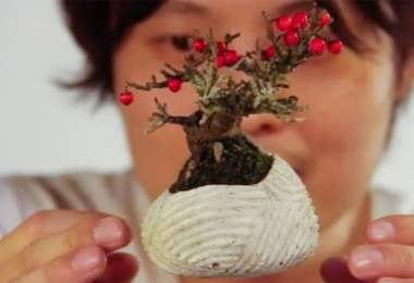 bonsai tree,