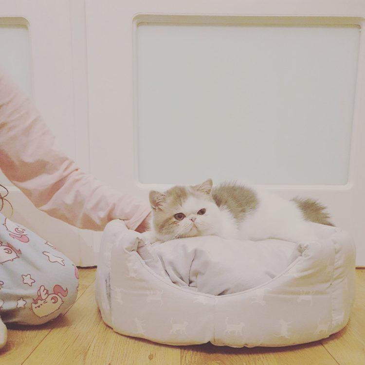 Misses Cat