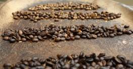kaffee fermentation header