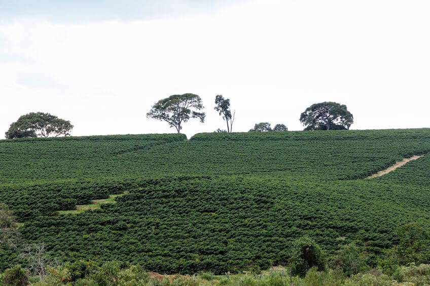 kaffee aus brasilien header
