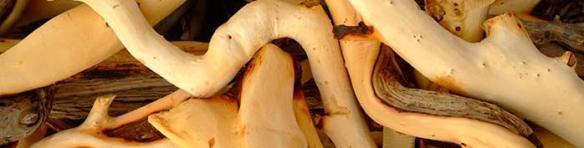 Australian sandalwood. Source: Mountain Rose Blog. http://mountainroseblog.com/choose-australian-sandalwood-essential-oil/