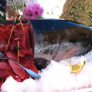 Sunday Tuna 3