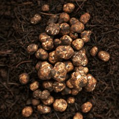 Truffles in the dirt via sunset.com