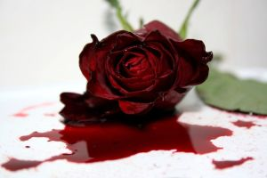 """Dying Rose"" by Janina Photography on Deviantart.com. (Website link embedded within.)"