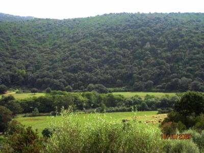 One part of the Corsican countryside. Photo: my own.