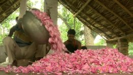 Kannauj attar producers in India. Source: bbc.co.uk