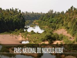 PARC NATIONAL DU NIOKOLO KOBA+