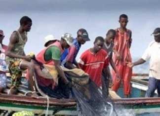 Les mareyeurs du Sénégal listent les maux de leur secteur