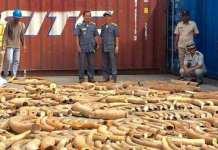 L'ivoire venait du Mozambique