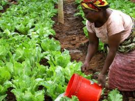 femme_agriculture_fao_0
