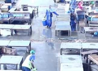 Huit Agents licenciés : Le Dg du Marché central au poisson de Pikine donne sa version