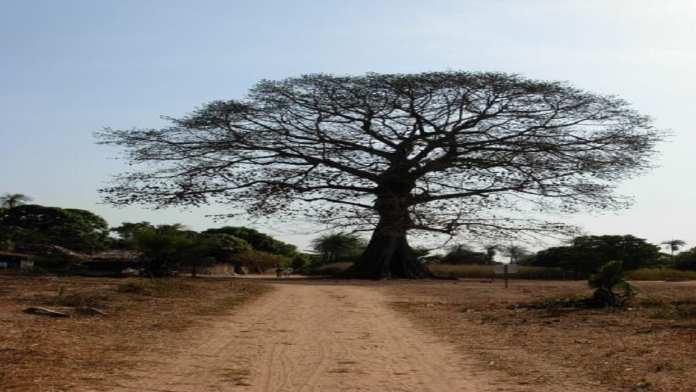 Randonnée de 8 jours à travers la haute Casamance.3