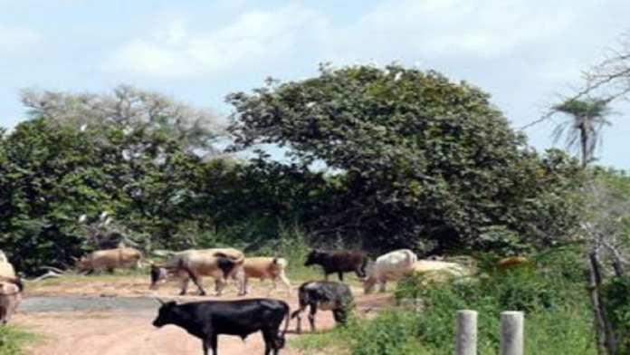 Randonnée de 8 jours à travers la haute Casamance.9