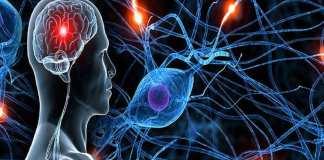 Les jeunes appelés à s'intéresser davantage à la neurologie