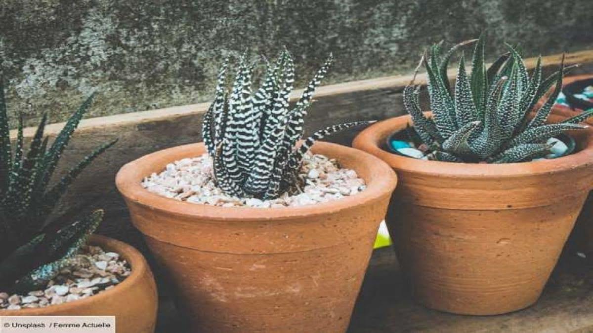Comment Entretenir Une Plante Aloe Vera aloe vera : quels sont les bienfaits de plus de 150 espèces?